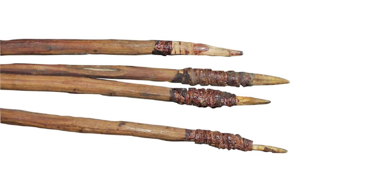 Four-pronged Fishing Spear (Fizz-gig), housed in the Australian Museum.
